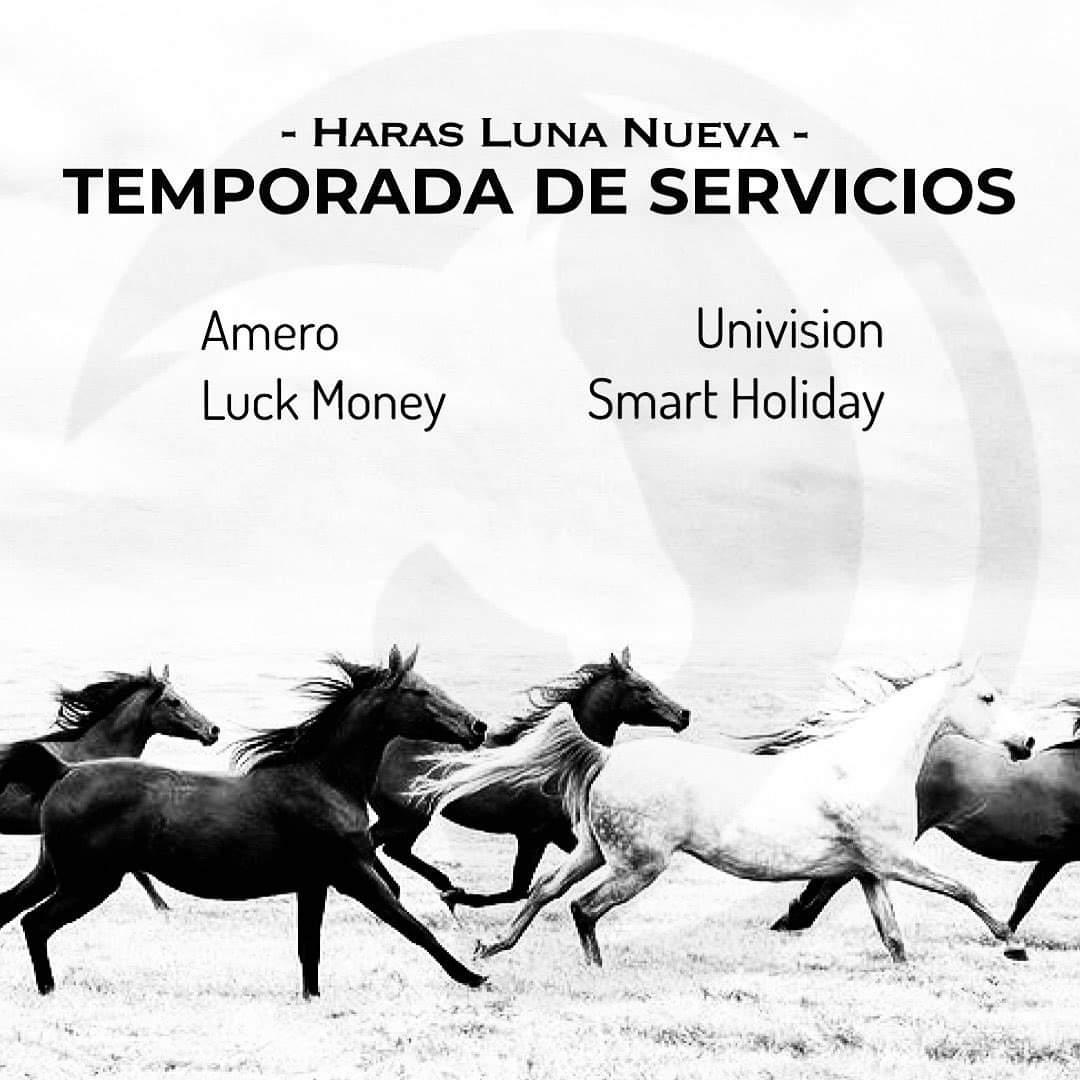 HS LUNA NUEVA - 1