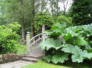 Wooden bridge among foliage