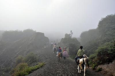 Wisata berkuda di Bromo
