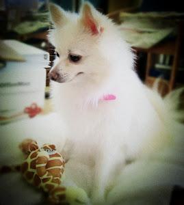 ♡My doggie-Yoshi♡