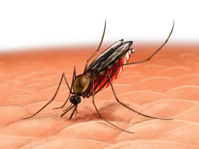 لقاح جديد للوقاية من مرض الملاريا بنسبة فعالية مرتفعة