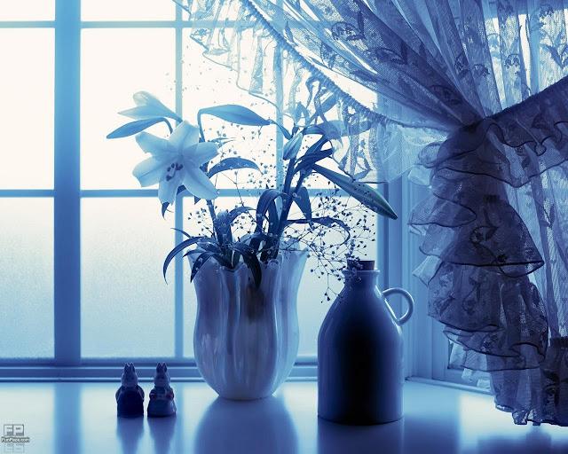 Flowers HD Desktop Wallpaper -02