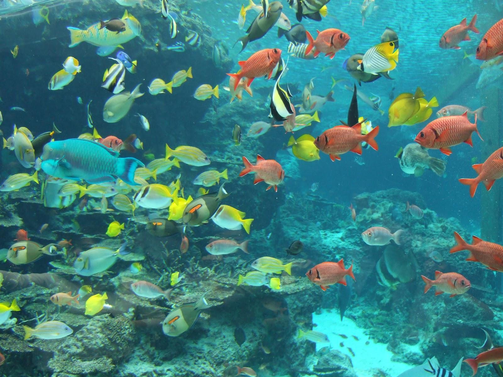 Nature Fish In Okinawa Churaumi Aquarium Okay Wallpaper