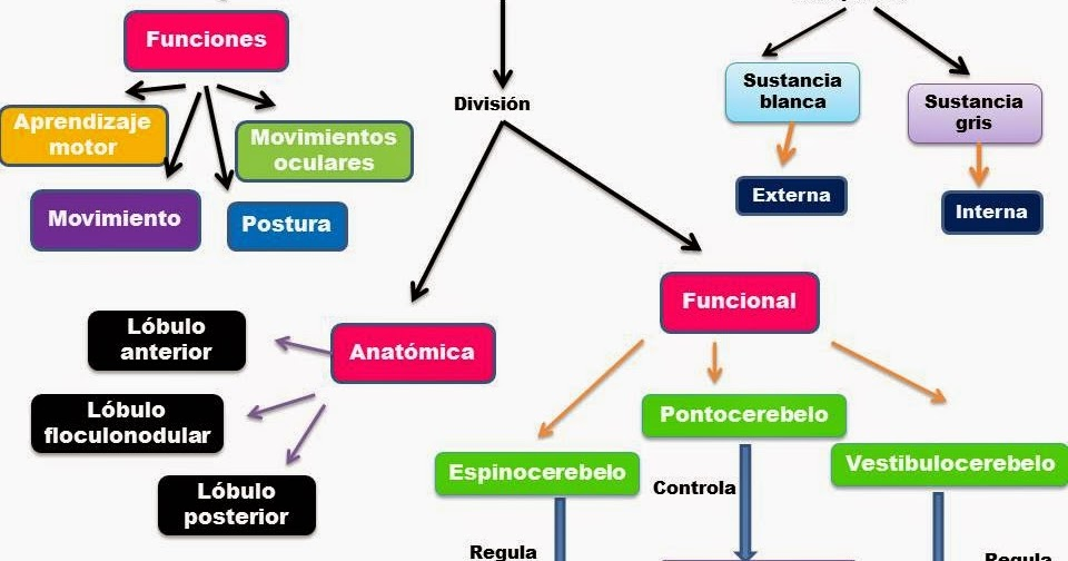 Blog de evidencias de fisiologia Medica de Bryanda Eriacema Higuera ...