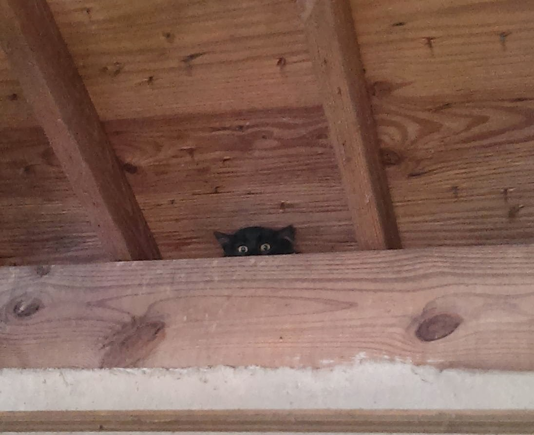 Funny cats - part 90 (40 pics + 10 gifs), cat peeks from ceiling