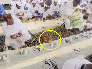 Cat waiting to break Ramadan fast in The Grand Mosque, Mecca