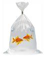 comprar peces agua dulce, peces agua dulce, cuidados peces agua dulce, adquisicion peces agua dulce, adquirir peces, vender peces agua dulce, acuario agua dulce, agua acuario agua dulce