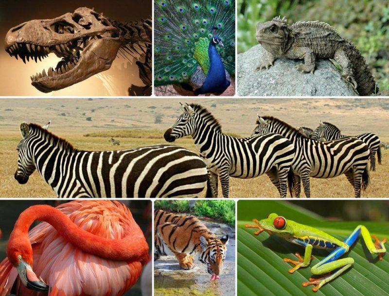 Biologi Kelas X Contoh Ekosistem Biologi Kelas