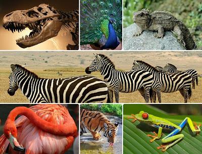 Contoh ekosistem alami ekosistem rawa sungai dan laut contoh ekosistem