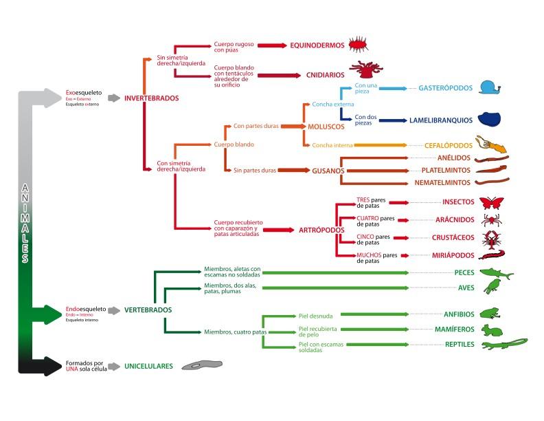 Clasificacion taxonomica de los seres vivos yahoo dating 8