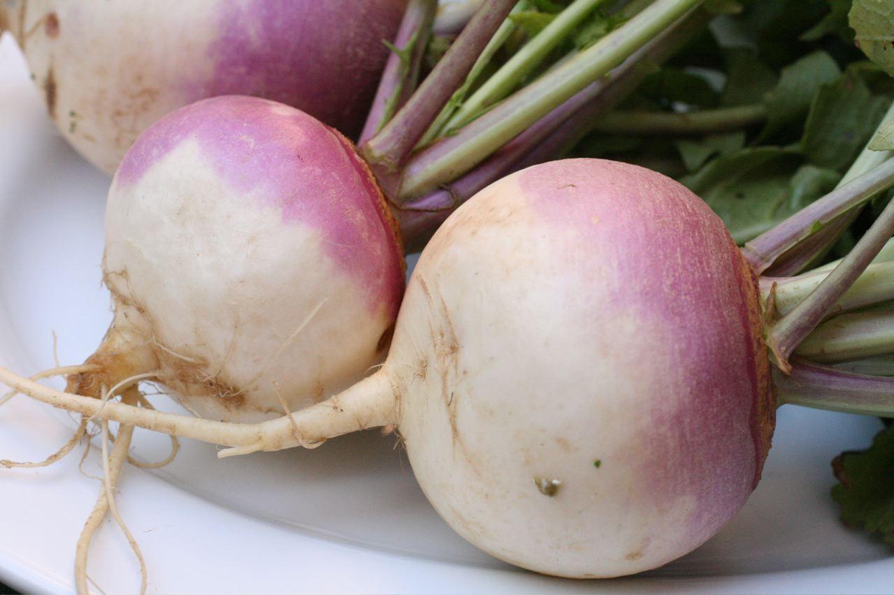 White turnips  Photo  ...