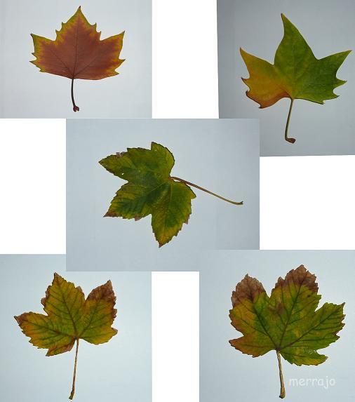 http://merrajo.blogspot.com.es/2015/11/como-secar-rapidamente-hojas-sin-perder.html