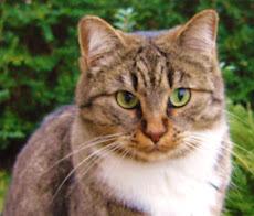 """""""solo un gatto sa sostenere lo sguardo di un re"""""""