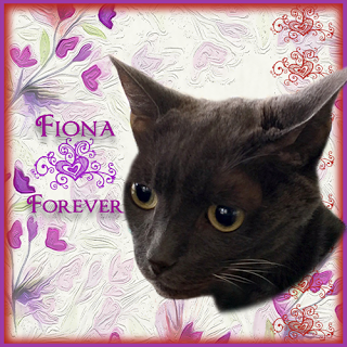 Remembering Fiona
