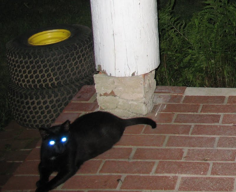why do animal eyes glow green Do the emerald green beams emanating from a cat's eyeholes give you the creeps find out why cats can fix you with with laser-like stares subscribe | http:.