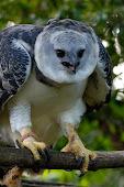 blog de aves