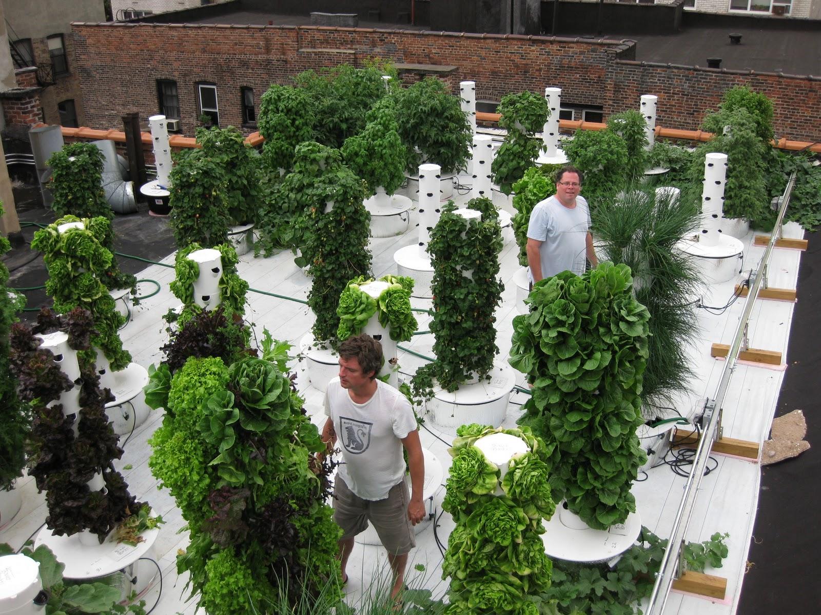 Mar Vista Green Garden Showcase 4127 Tivoli Avenue
