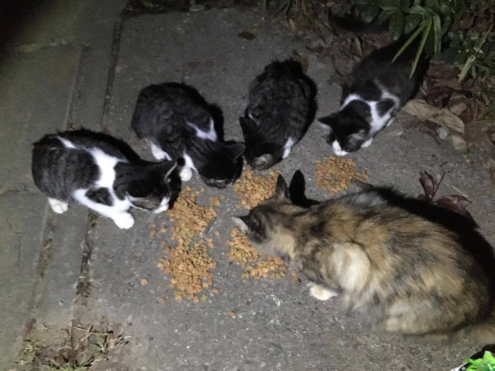 猫餌パトロール
