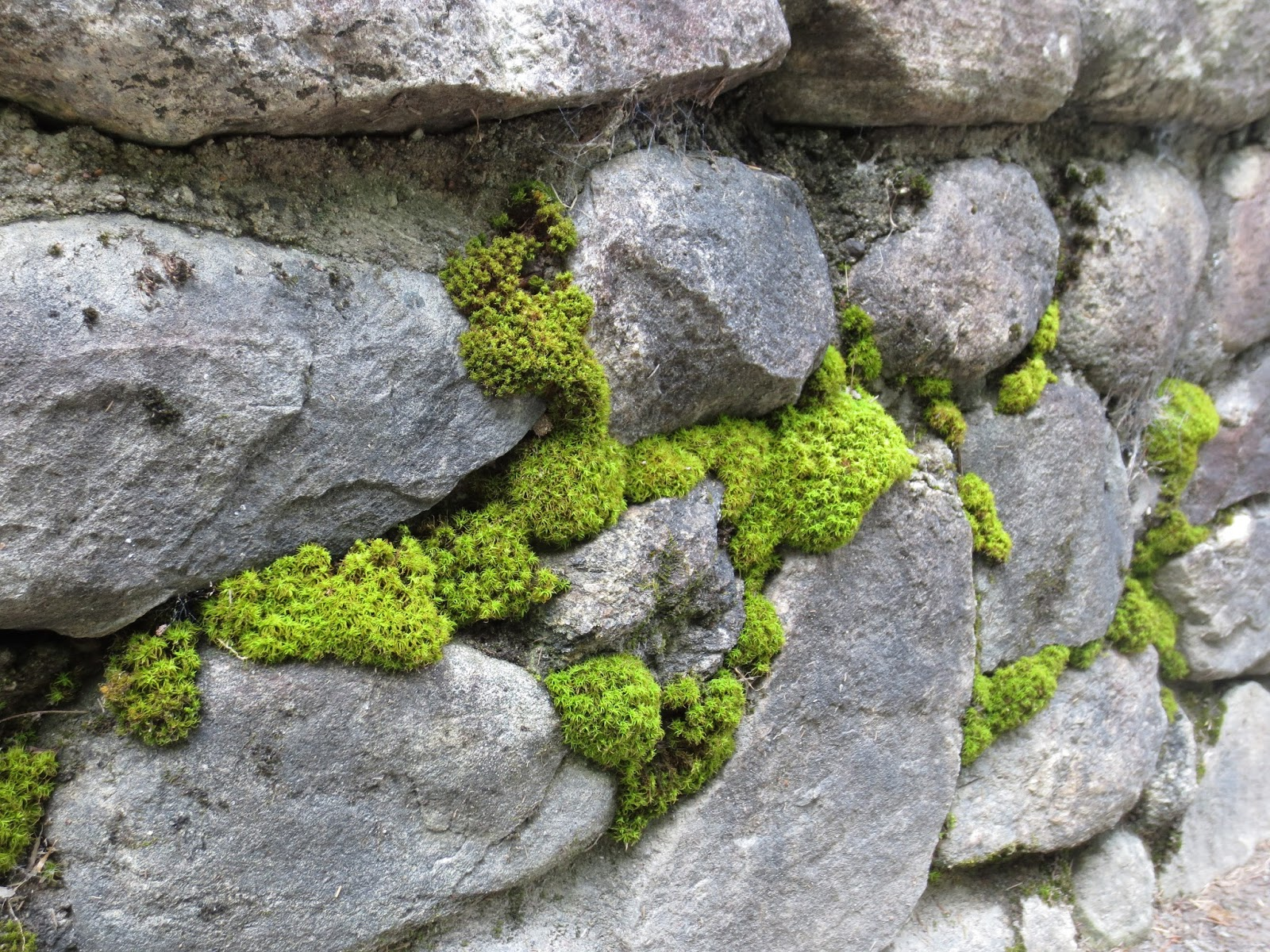 how to clean moss to grow on rocks