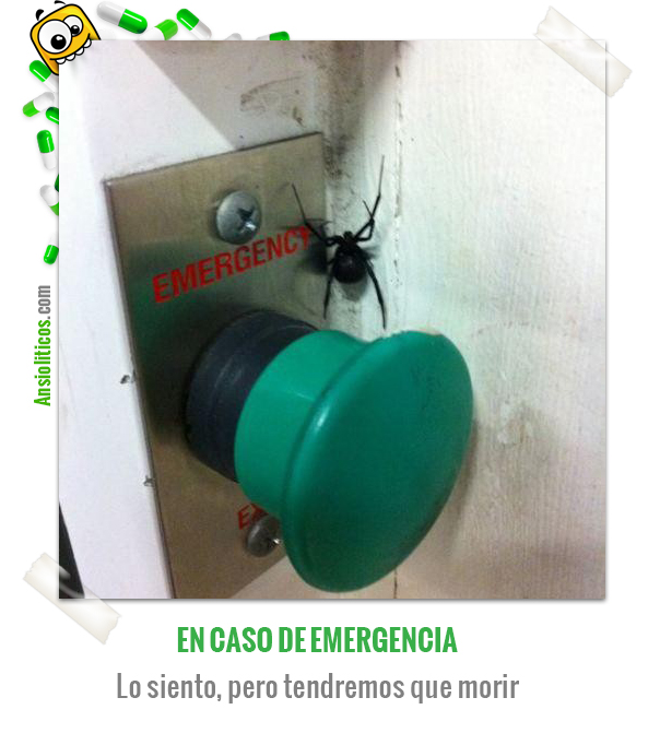 Chiste de Animales: Araña Mortal