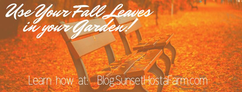 Blog.Sunset Hosta Farm.com