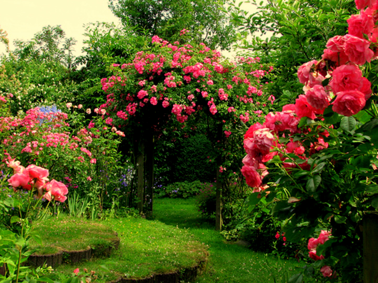 Rose flower garden flower hd wallpapers images for Beautiful flower landscapes