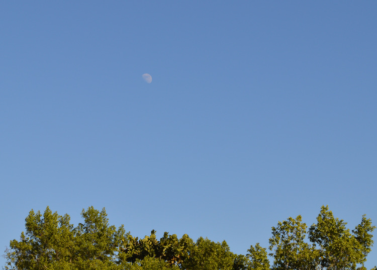 Moon in the Daytime