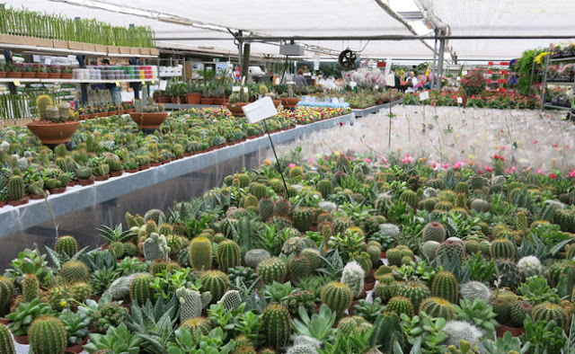 Paisaje libre visita a viveros shangai en madrid for Vivero de cactus