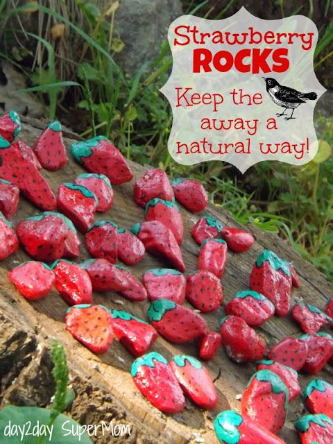 Strawberry Rocks Diy- Keep away the birds naturally