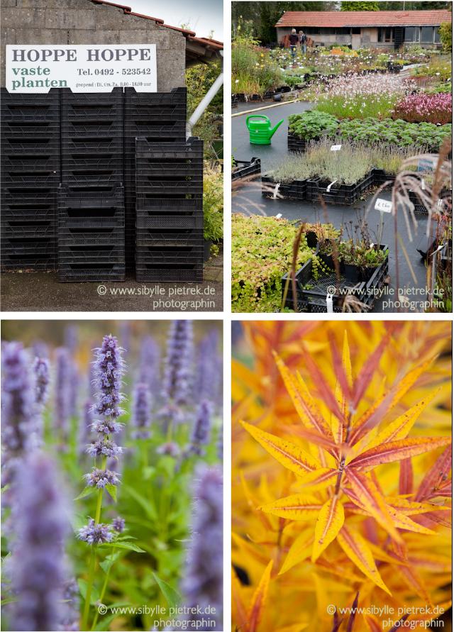 gartenfotografie gartenblick auf nach holland tuinzondernaam. Black Bedroom Furniture Sets. Home Design Ideas