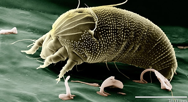 Animal that  Runs the Fastest - Mighty Mite
