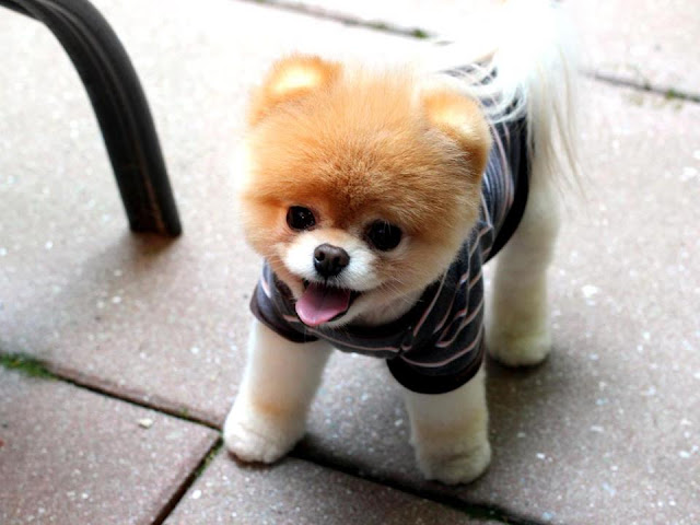 Adorable dog picture in dress