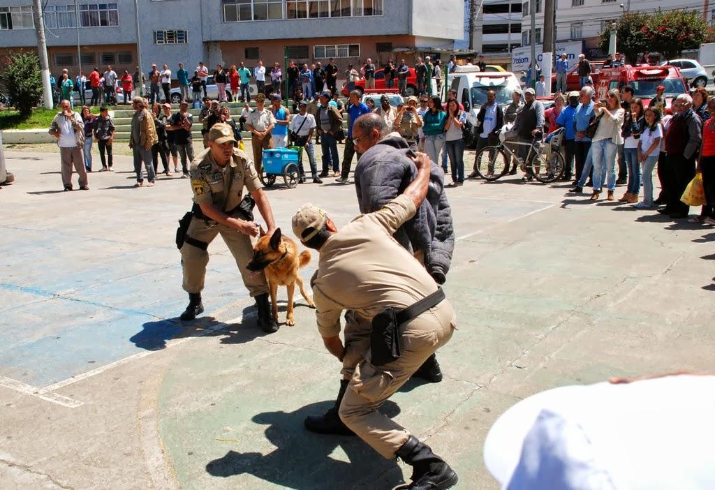 Performance dos cães adestrados em simulação de ocorrência policial