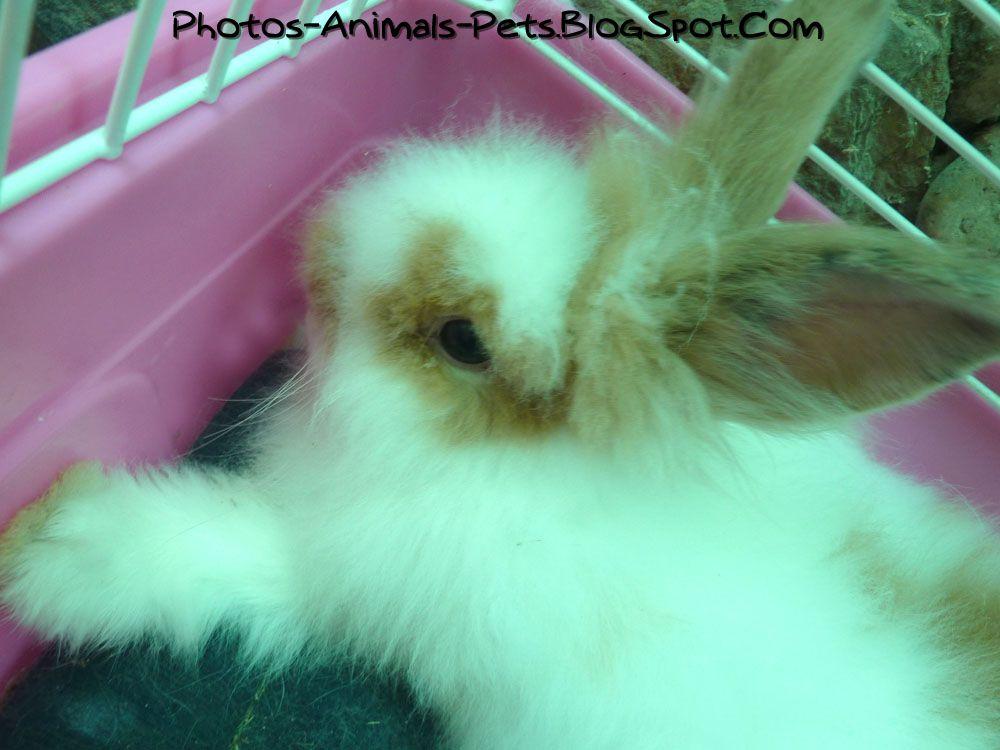 http://4.bp.blogspot.com/-oOjzLOqRXdo/Tb7dRN6jj0I/AAAAAAAAA6M/YqqV7P-66wQ/s1600/Cute%2Brabbit-lion%2Bhead_0001.jpg