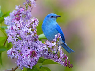 Blue Bird New Desktop Wallpaper