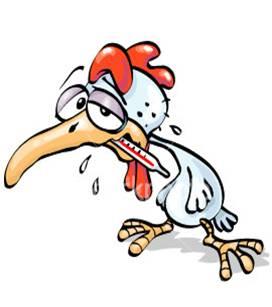 Petunjuk cara pemeliharaan ayam buras bagian ke 8 (habis)