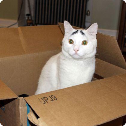 noticias curiosas animales - gato con cejas