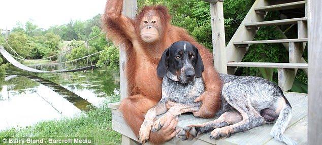 Orangutan and hound -- best