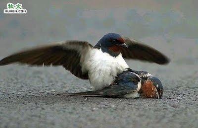 Burung Yang Malang