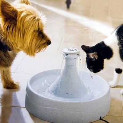 Fuentes Agua Para Gatos Esta Fuente de Agua Para