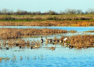 Birds at the Brazoria National Wildlife Refuge