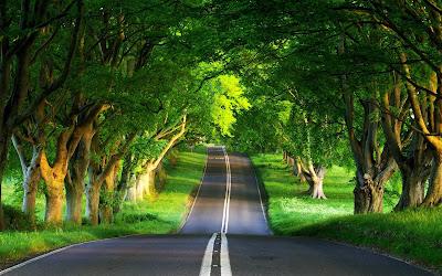 Fotografía de una carretera rodeada de árboles verdes