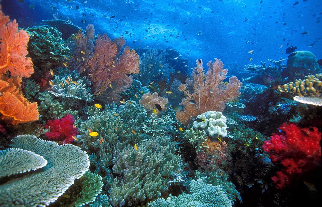 Apakah terumbu karang itu?
