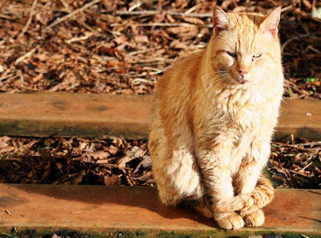 orange camo cat, anonymous