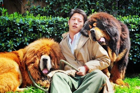 A Tibetan mastiff puppy has been sold in China for almost $2 million, a report said Wednesday, in what could be the most expensive dog sale ever.
