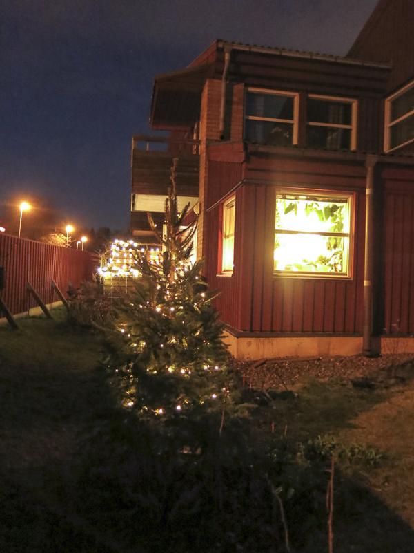 julgran, fönsterbelysning