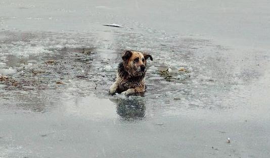 """Результат пошуку зображень за запитом """"собака провалилась под лед"""""""