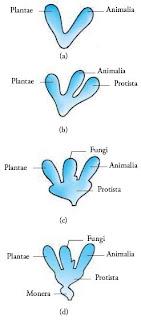 Perkembangan sistem klasifikasi makhluk hidup