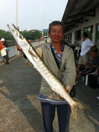 Yellowtail Barracuda [Sphyraena Flavicauda] also know as Saw Kun 沙君 [Hokkien] or Ikan Kacang [malay] weighing 3kg plus caught by Ah Lee at Woodland Jetty on 23rd June 2013 using live Five-spot Herring or Assam fish (local), Selangat (malay) on float.