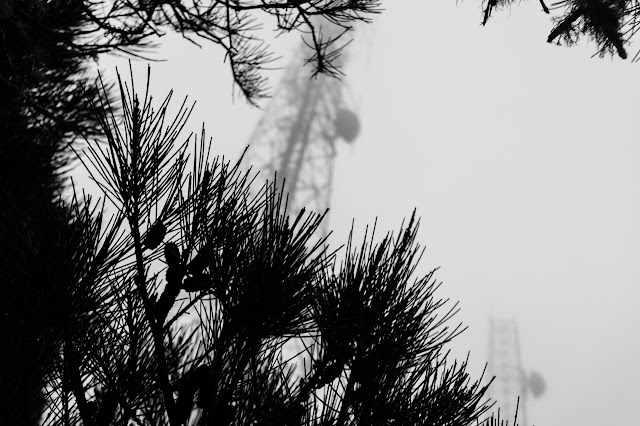 transmission towers in mist on mount william summit